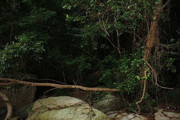 Девственные джунгли возле отеля Pangkor Island Beach Resort. О.Пангкор, Малайзия. PhotoBySvetlanaFonfrovich