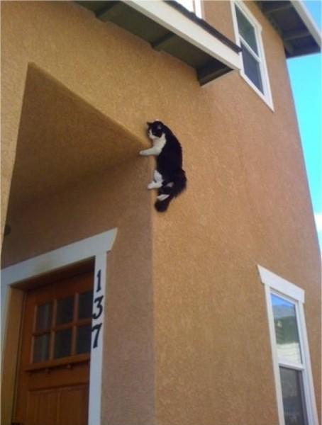 Котик на стене
