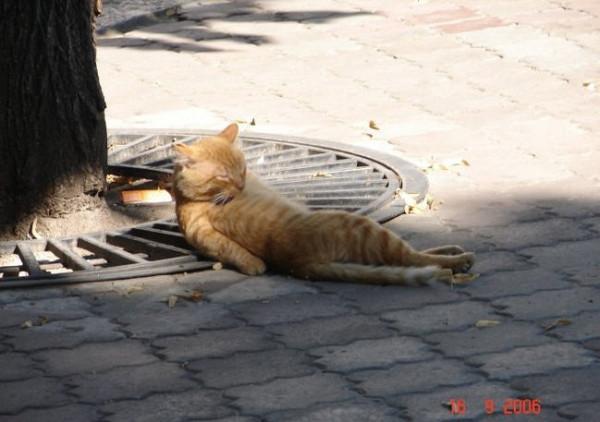 рыжий спящий кот