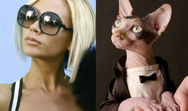 Виктория Бекхэм и кошка породы сфинкс.