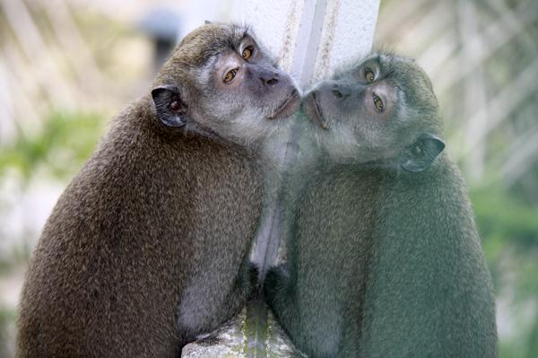 Зеркало и обезьяна. Photo by Svetlana Fonfrovich