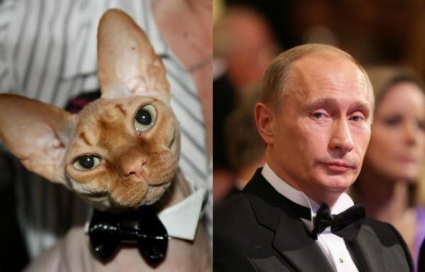 Путин и котэ на приёме