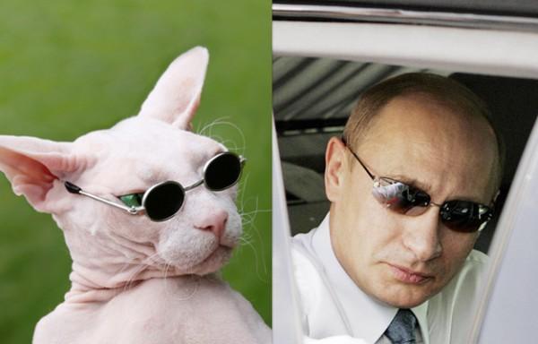 Кот и Путин в тёмных очках