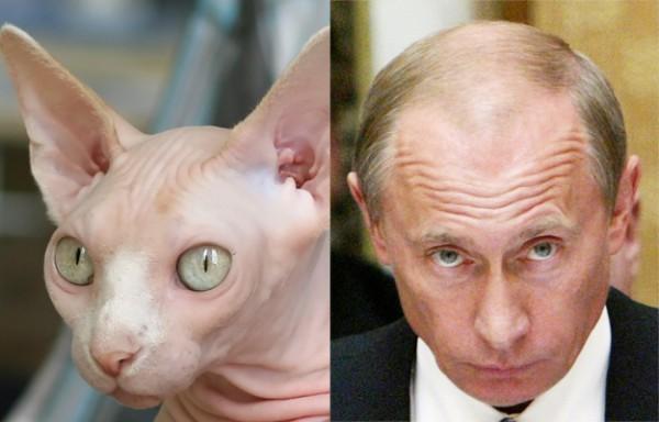 Кот и Путин глядят исподлобья