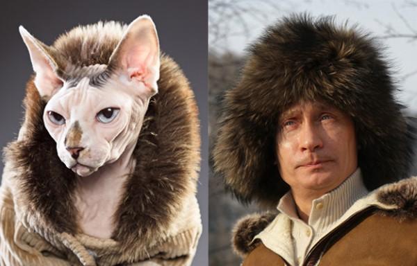 Кот и Путин зимой