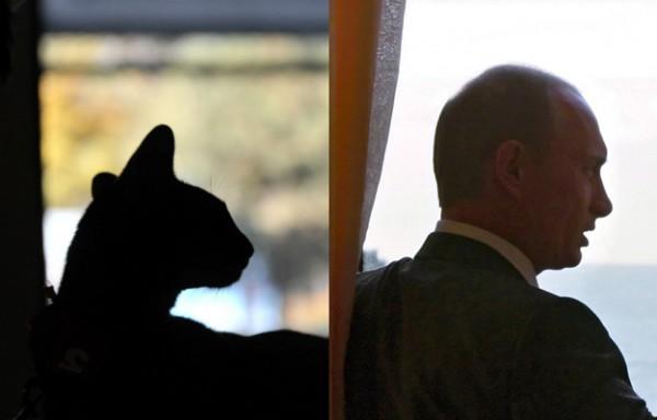 Кошки, похожие на людей