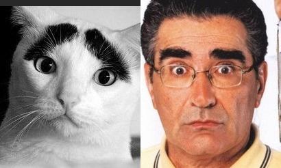 Кот с бровями и Юджин Леви