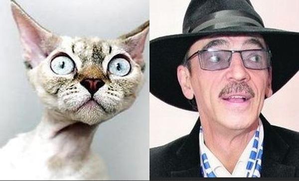 Кошка и Михаил Боярский