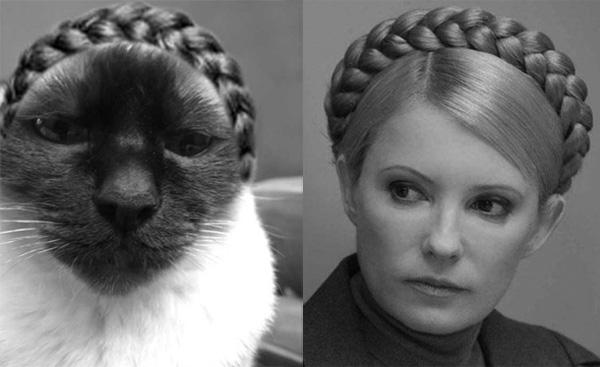 Эту кошку зовут Юля