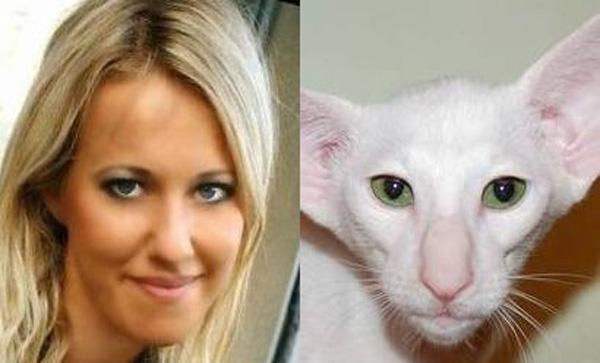 А эту кошку восточной породы зовут Ксю