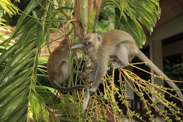Обезьянки на пальме. Photo by Svetlana Fonfrovich