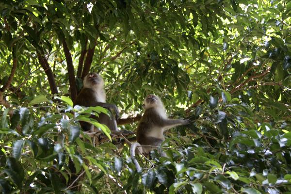 Обезьяны на дереве Photo by Svetlana Fonfrovich