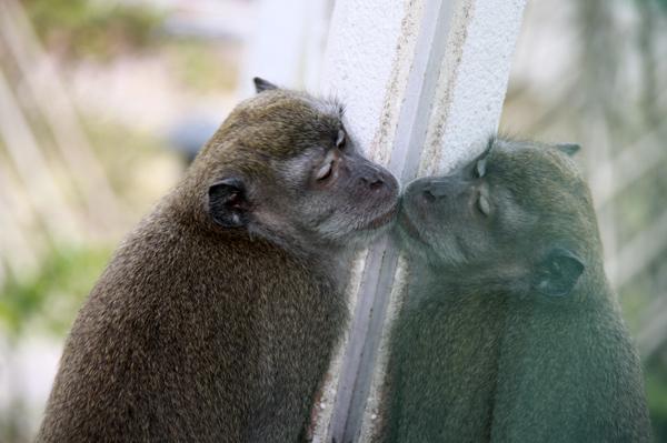 Обезьяны целующиеся. Photo by Svetlana Fonfrovich