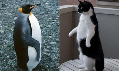 Пингвин и Кот