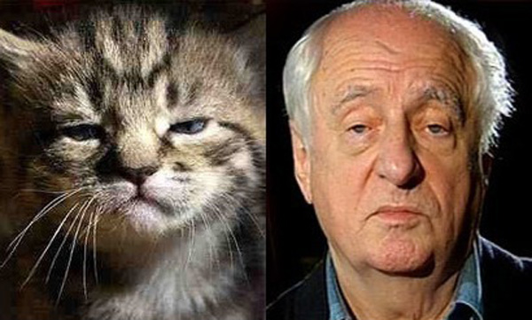 Притомившийся кот и Марк Захаров.