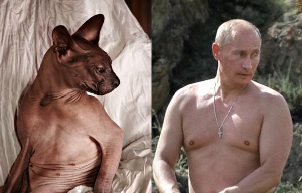 Путин, голый по пояс и котэ