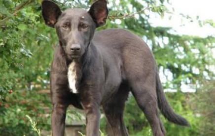 Собака похожая на Путина