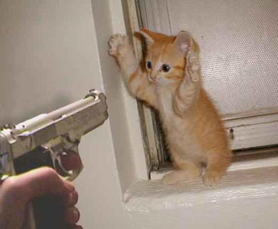 Билль о правах кота