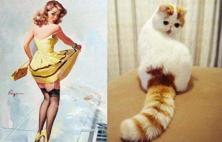 Девушки и котики: картинки в стиле пин-ап