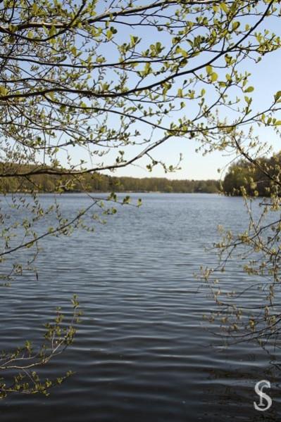 Субботник на Малаховском озере фото - Светлана Фонфрович
