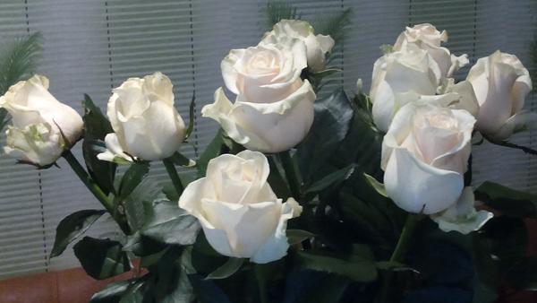 Как сохранить розы свежими #PhotoByNoorySan (10)