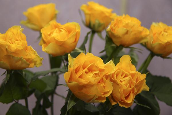 Как сохранить розы свежими #PhotoByNoorySan (13)