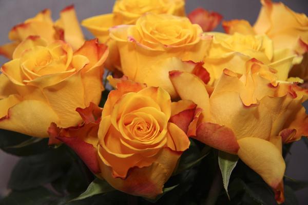 Как сохранить розы свежими #PhotoByNoorySan (14)