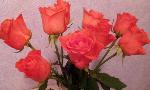 Как сохранить розы свежими #PhotoByNoorySan (2)