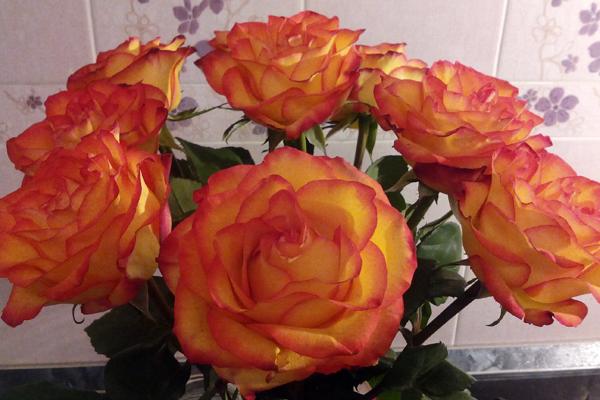 Как сохранить розы свежими #PhotoByNoorySan (3)