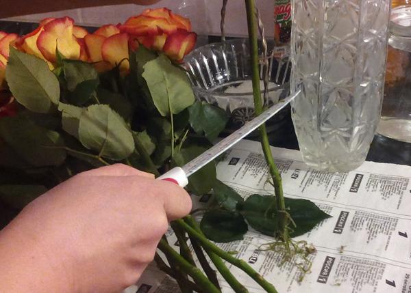 Как сохранить розы свежими #PhotoByNoorySan (5)