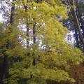 Лес Плоховое в Малаховке
