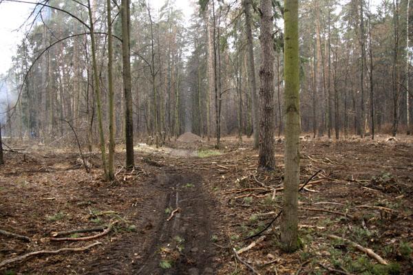 Рубка леса Плоховое Малаховка (2)