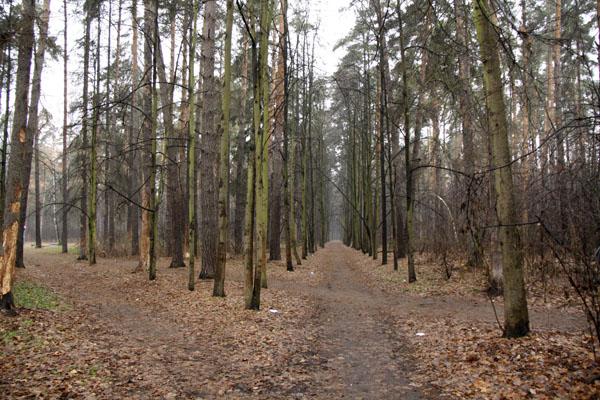 Рубка леса Плоховое Малаховка (3)