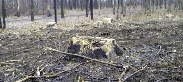 Рубка леса Плоховое Малаховка (5)