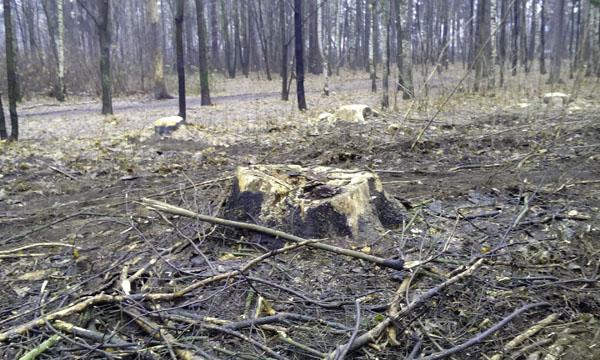 История леса Плоховое