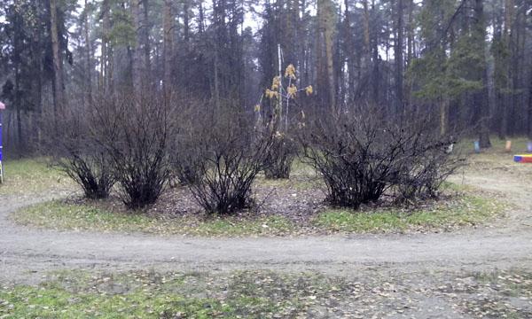 Рубка леса Плоховое Малаховка (6)
