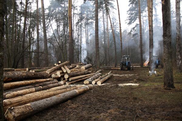 Рубка леса Плоховое Малаховка
