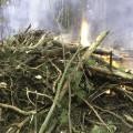 Рубка леса Плоховое в Малаховке 2014