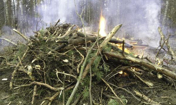 Субботник в лесу Плоховое в Малаховке