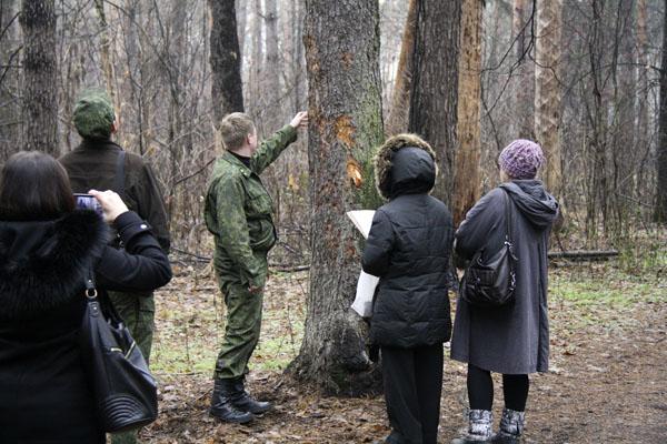 Рубка леса в Малаховке, лесопатолог