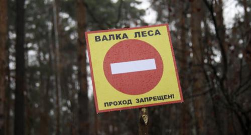 Рубка леса в Малаховке 2014 (2)