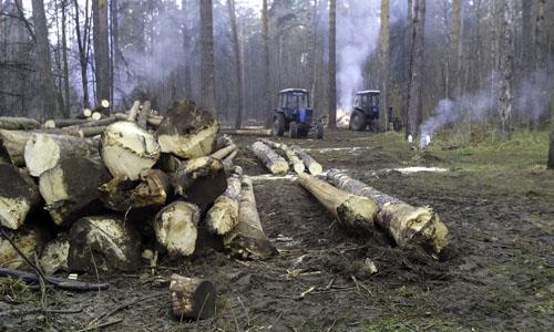 Рубка леса в Малаховке 2014 (3)