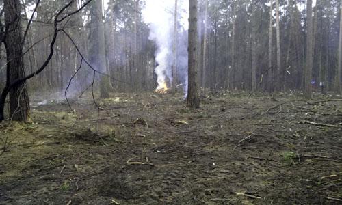 Рубка леса в Малаховке 2014 (5)