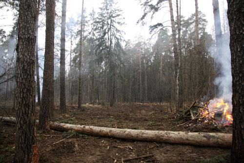 Рубка леса в Малаховке 2014 (7)