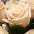 Роза розовая от @noorysan
