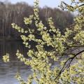 Верба-на-Малаховском-озере-от-@noorysan.jpg