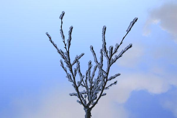 Ветки во льду. Фото Светланы Доможировой