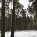 Вырубка леса в п. Малаховка 2014