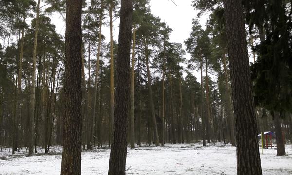 В лесу прифронтовом