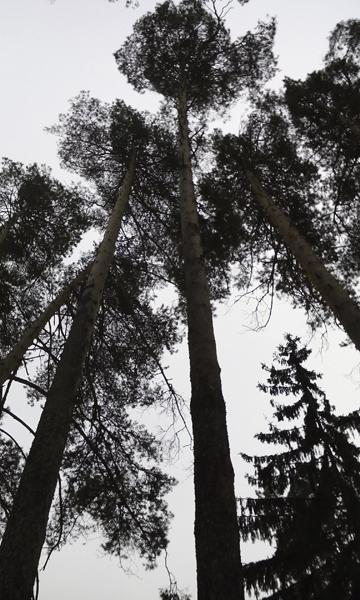 Вырубка леса в Малаховке (7)